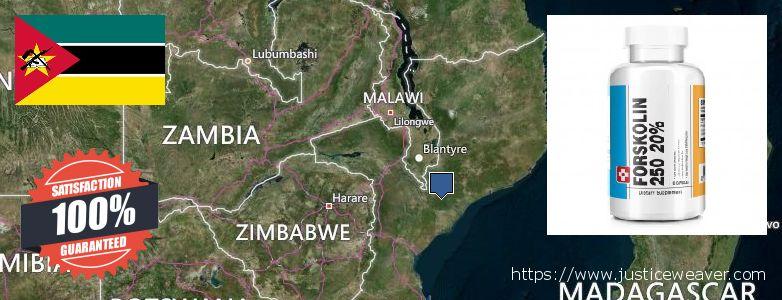 Де купити Forskolin онлайн Mozambique